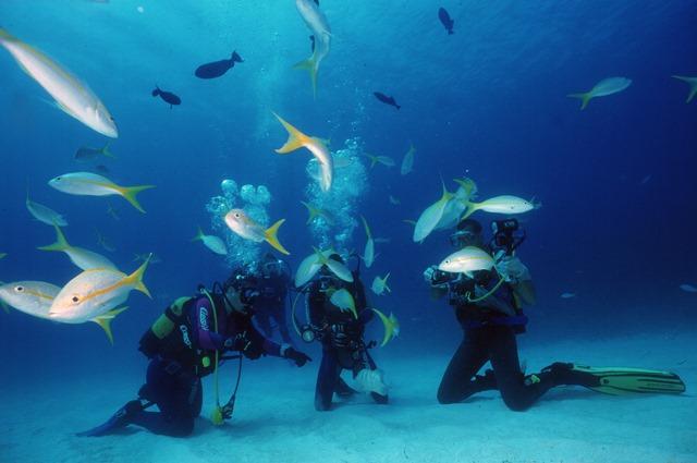 Circuit plongée - Immersion cubaine